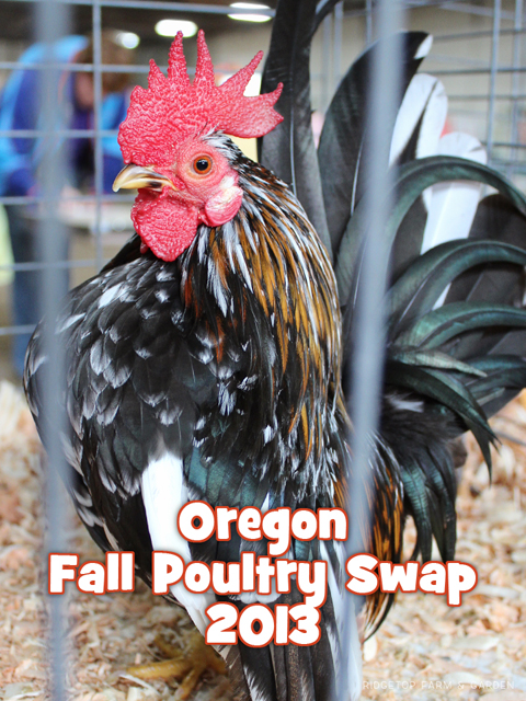 Fall Poultry Swap 2013 title sized