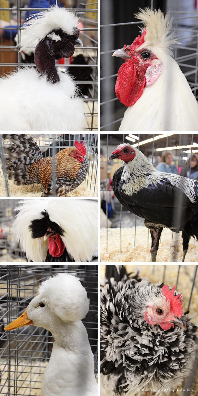 PNPA Spring 2013 poultry