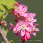 Bloom Day – April 2014