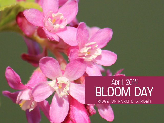 April 2014 Bloom Day title
