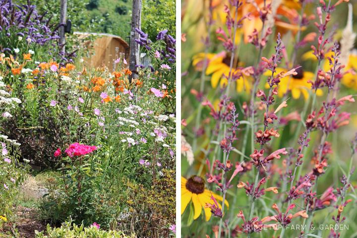Aug 2012 Bloom Day bird village2