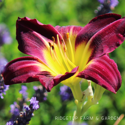 Bloom Day – August 2014