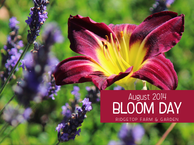 Aug 2014 Bloom Day title