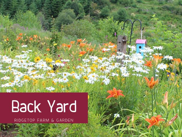 Backyard title