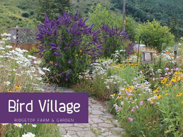 Bird Village Title