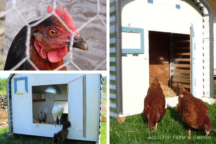Chicken Tractor 5