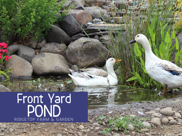 Front Pond title
