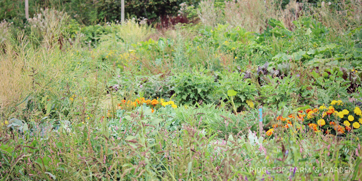 Garden Grows Aug2014 1