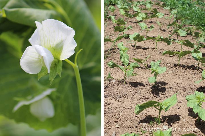 Garden Grows June2014 2