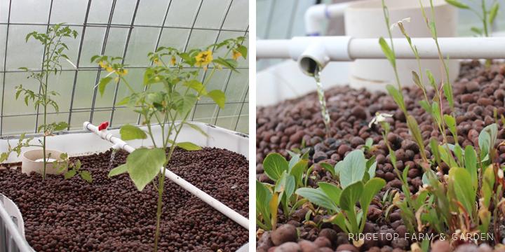 Garden Grows June2014 greenhouse1