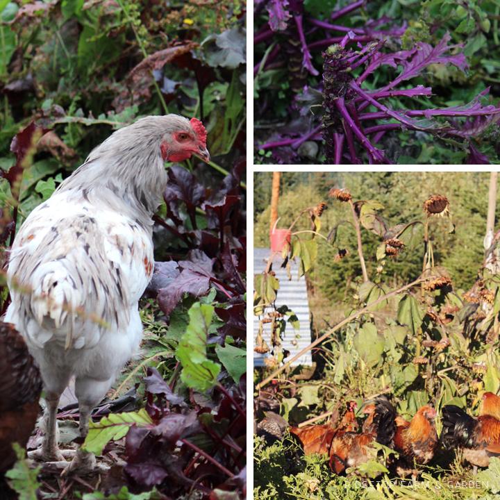 Garden Grows Oct2014 3
