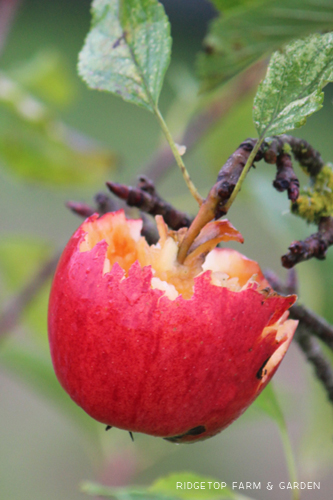 Garden Grows Oct2014 fruit2