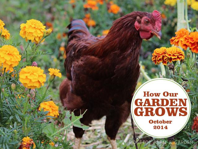 Garden Grows Oct2014 title2