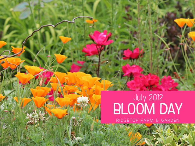 July 2012 Bloom Day title