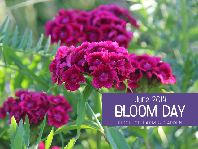 June 2014 Bloom Day title