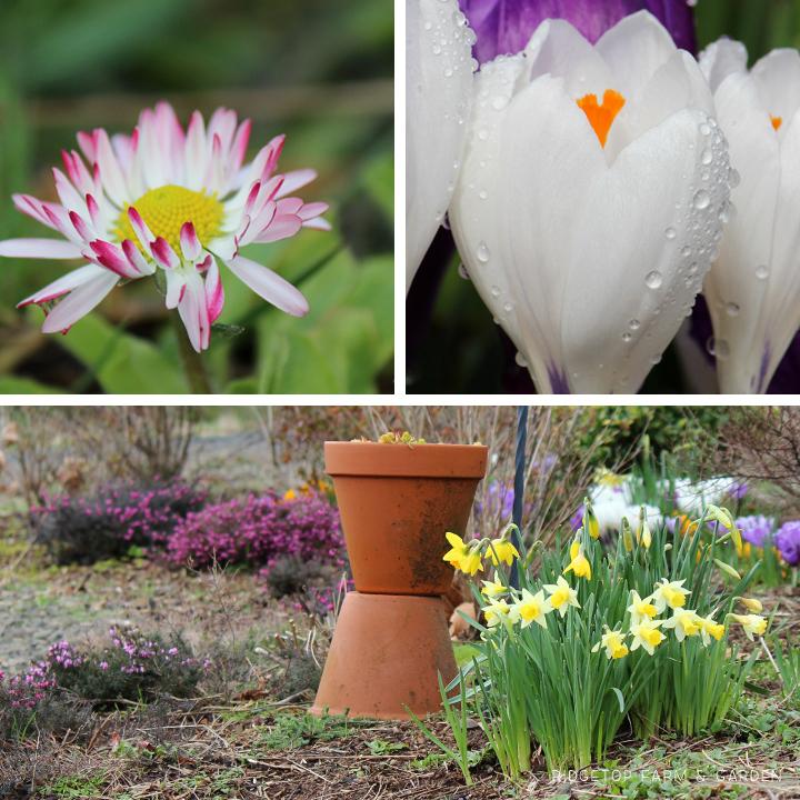 March 2014 Bloom Day bird village