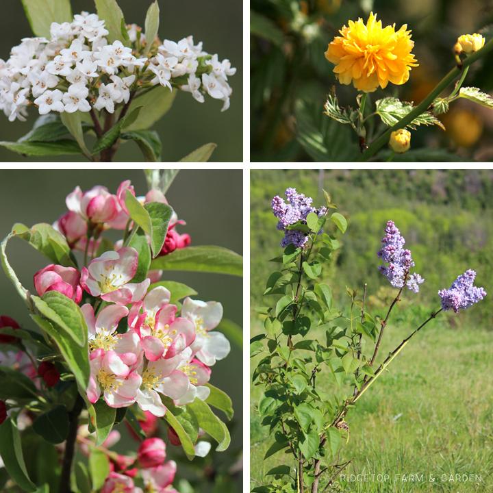 May 2014 Bloom Day back yard