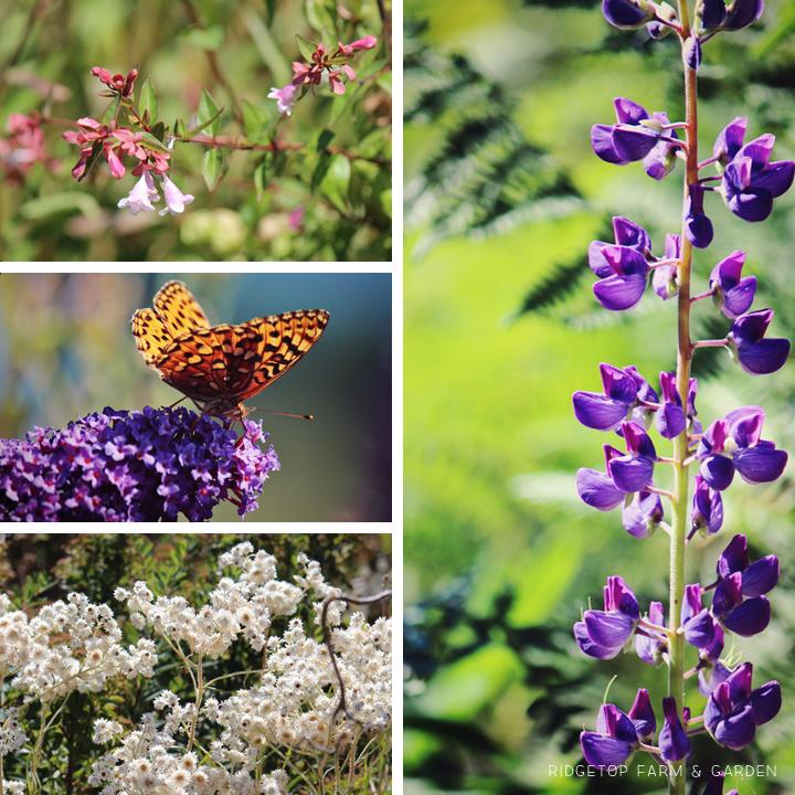 Sept 2014 Bloom Day bird village