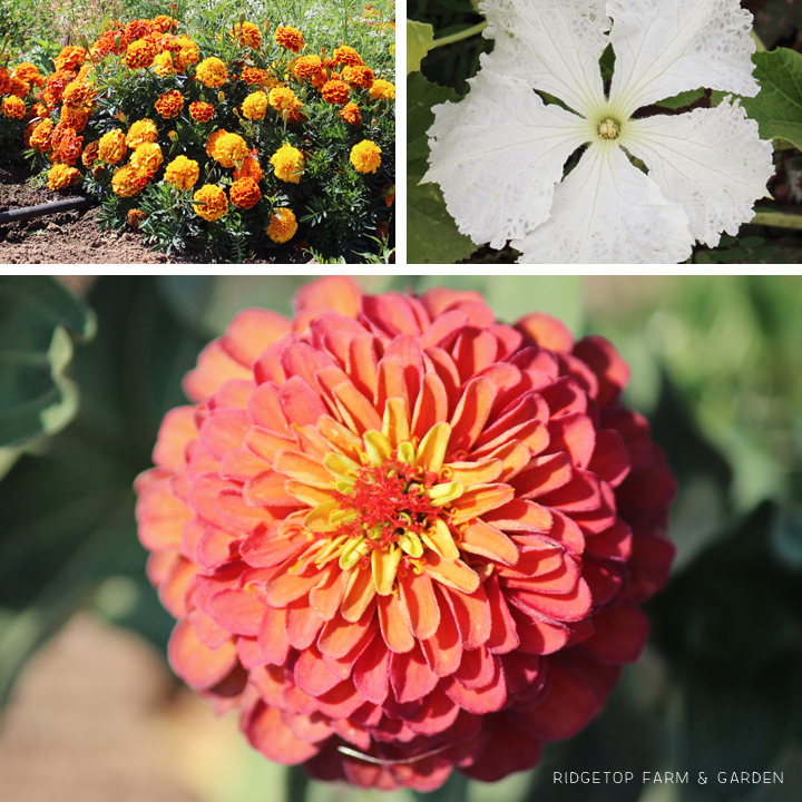 Sept 2014 Bloom Day misc