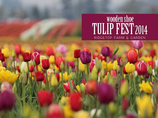 Ridgetop Farm and Garden | Wooden Shoe Tulip Fest 2014