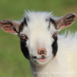 We Got Goats!