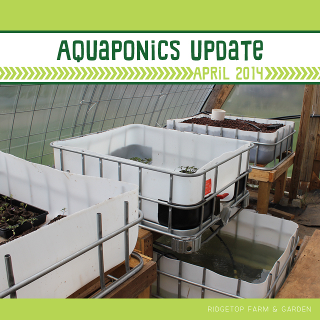 Ridgetop Farm & Garden | Aquaponics Update April 2014