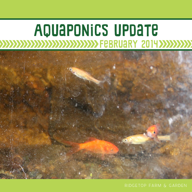 Aquaponics Update Feb2014 title