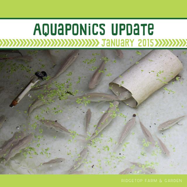 Aquaponics Update Jan2015 title