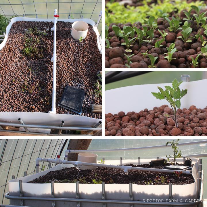 Ridgetop Farm & Garden | Aquaponics Update May 2014 | Grow Bed
