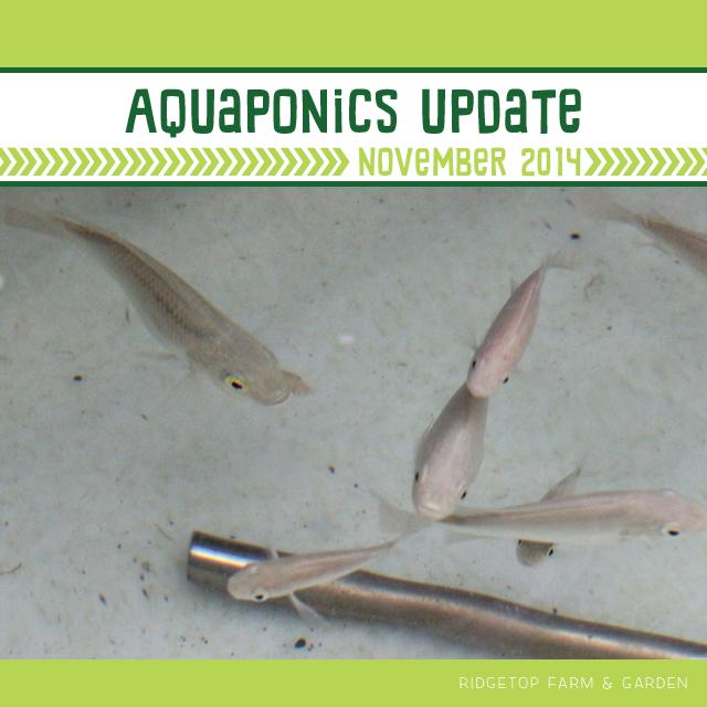 Aquaponics Update Nov2014 title