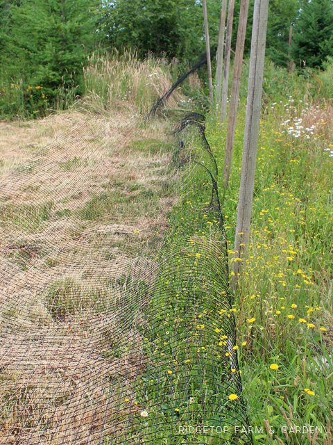 Garden Grows June 2015 deer fence