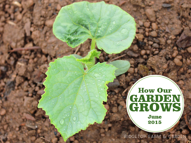 Garden Grows June 2015 title