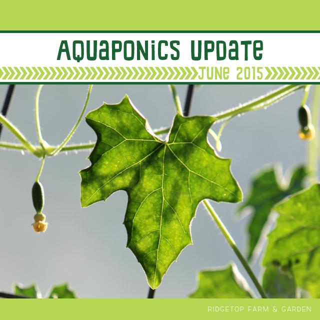 June 2015 Aquqponics Update title