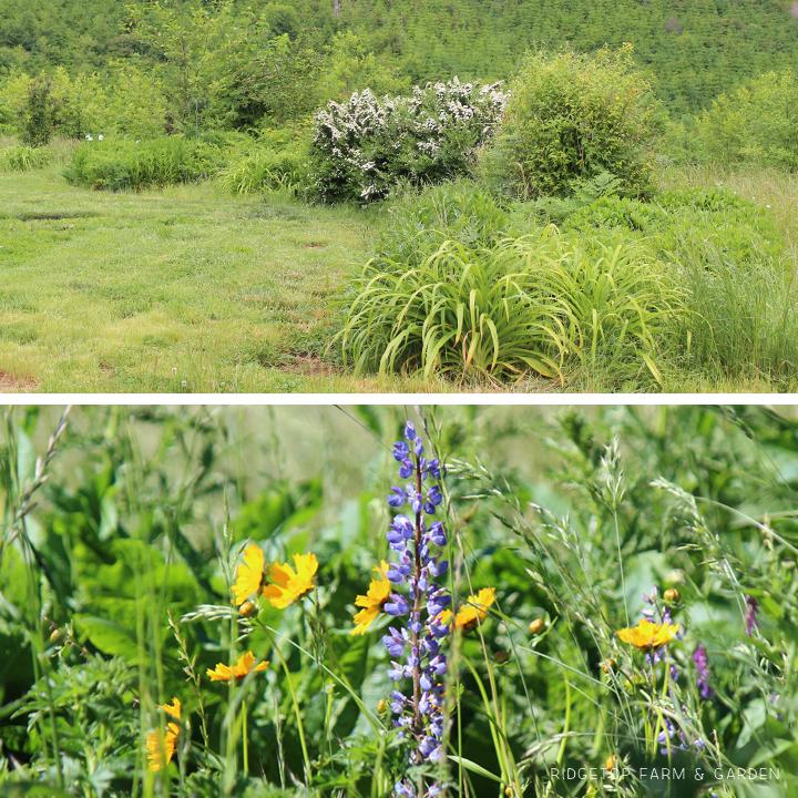 June 2015 Bloom Day back yard1