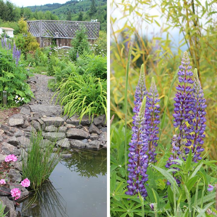 June 2015 Bloom Day bird village1