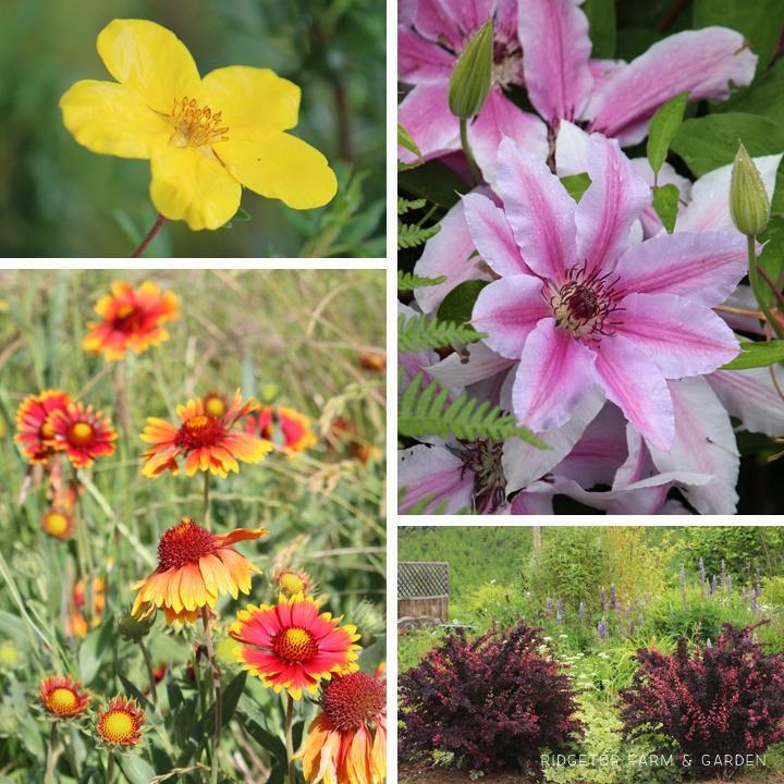 June 2015 Bloom Day bird village2