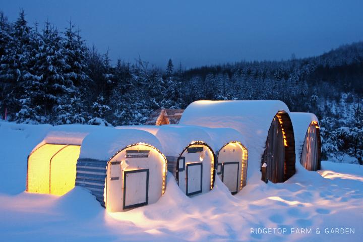 Snowpocalypse 7