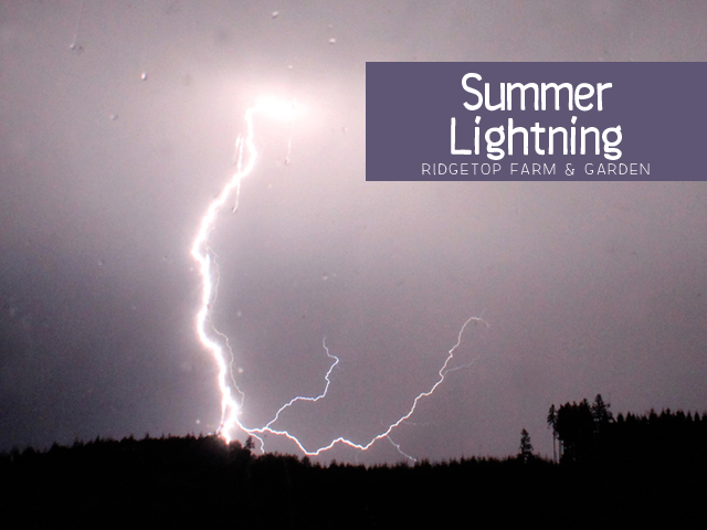 Ridgetop Farm & Garden | Summer Lightning