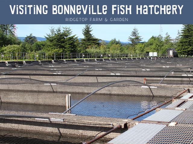 Ridgetop Farm & Garden | Bonneville Fish Hatchery