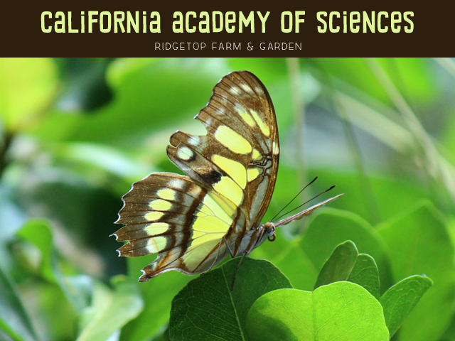 California academy of sciences title