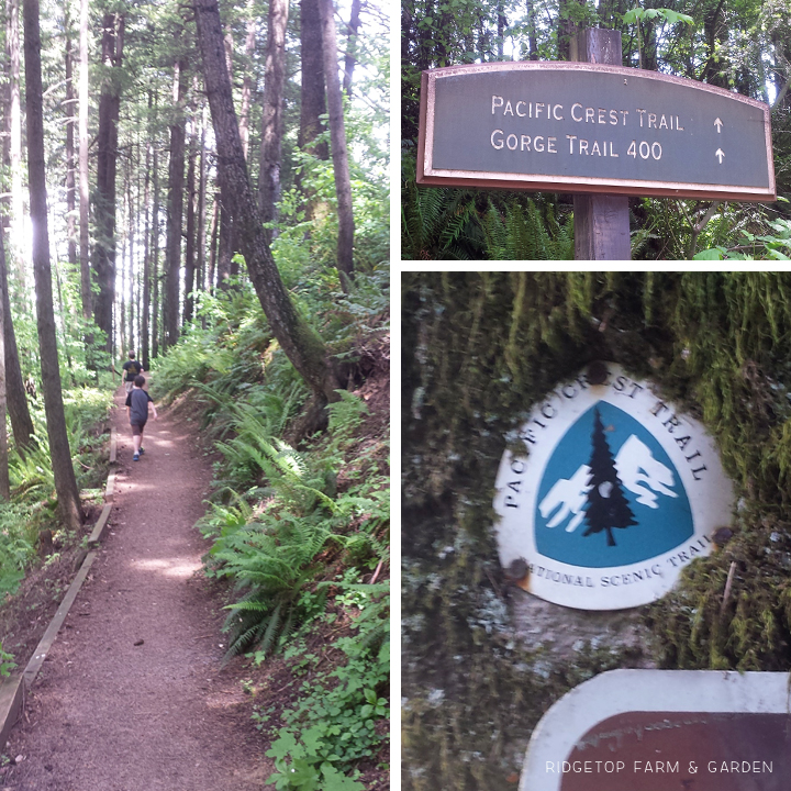 Ridgetop Farm & Garden | Columbia Gorge Day Trip | Pacific Crest Trail