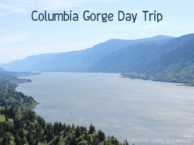 Ridgetop Farm & Garden | Columbia Gorge Day Trip