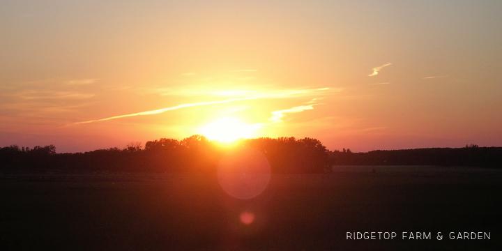 Ridgetop Farm & Garden | Laura| DeSmet | Pageant