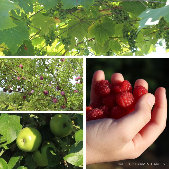 Garden Grows July2015 fruit