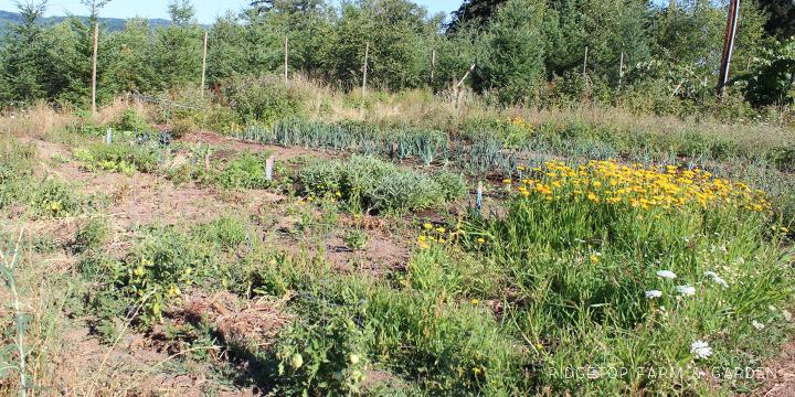 Garden Grows July2015 garden