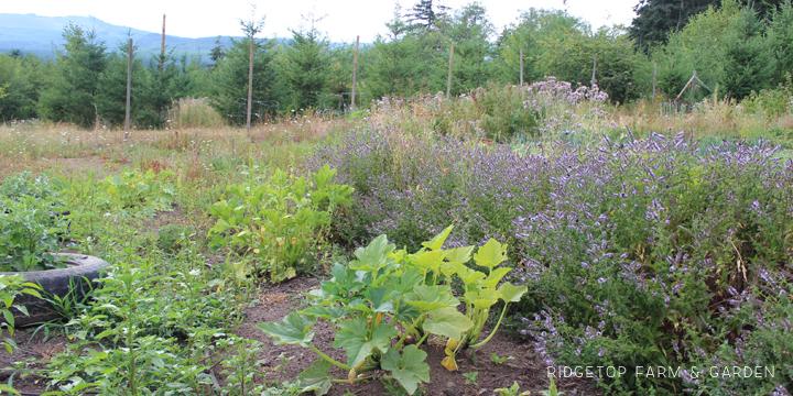 Garden Grows July2015 garden2