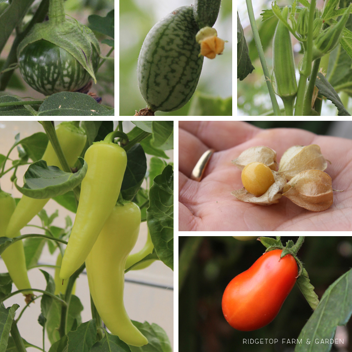 Ridgetop Farm & Garden | How Our Garden Grows | August 2015 | Greenhouse