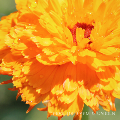 Bloom Day – August 2015