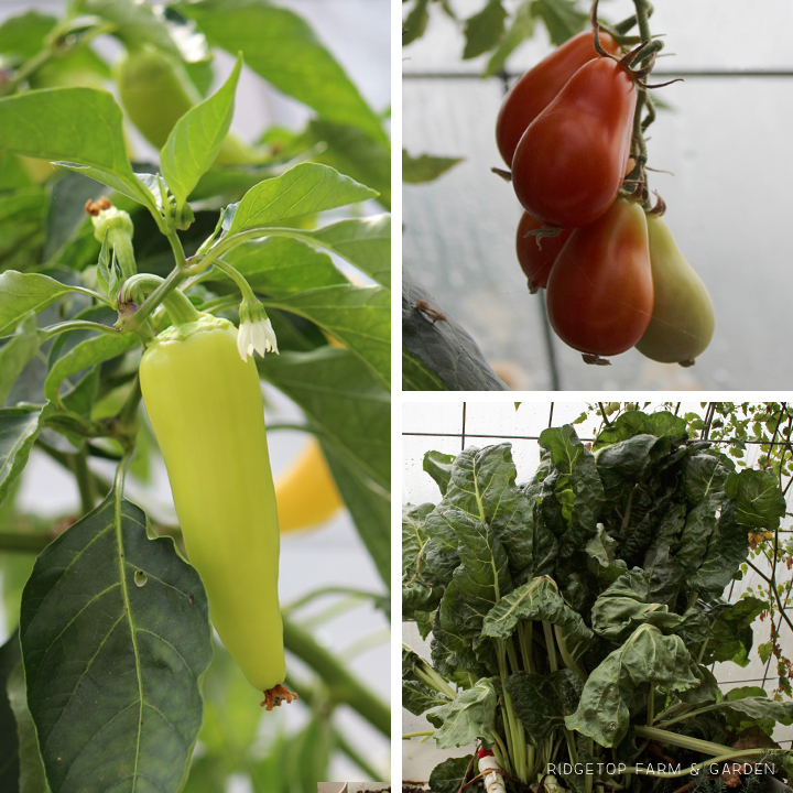 Ridgetop Farm and Garden | Aquaponics |September 2015