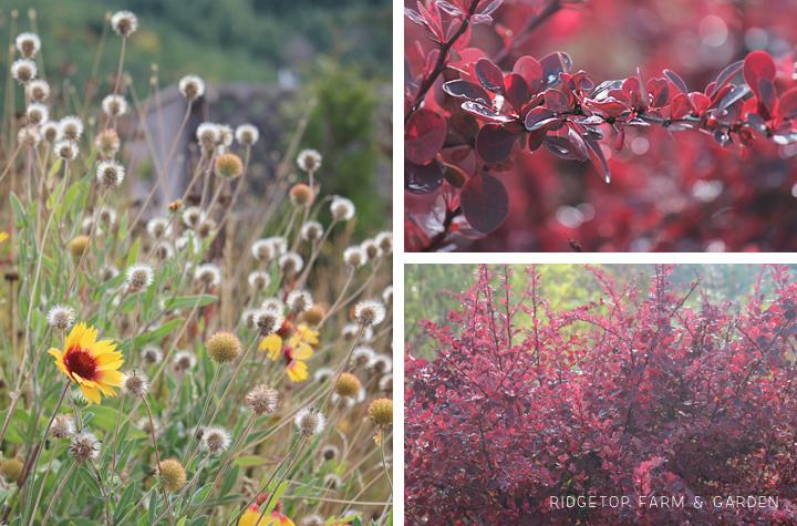 BloomDay-Sept2015_11